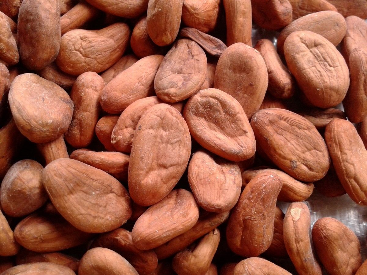 Organic Raw Cocoa Beans FOR SALE