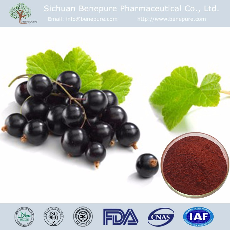 Natural black currant extract powder CAS 4852-22-6 Anthocyanins 5%-25% Ribes nigrum L. BENEPURE