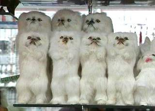 Fur animals,fur horse,fur dogs,fur pets,fur toys, lucky animals, lucky imitated animals, lucky imita