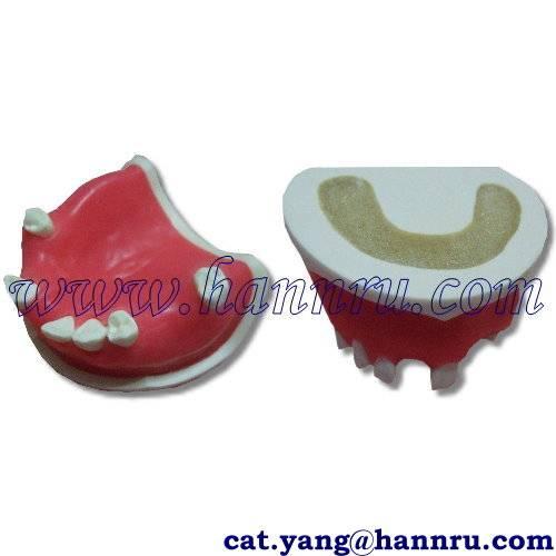 Dental model POS-01 Multi-function Practice Jaw Model - Hann Ru