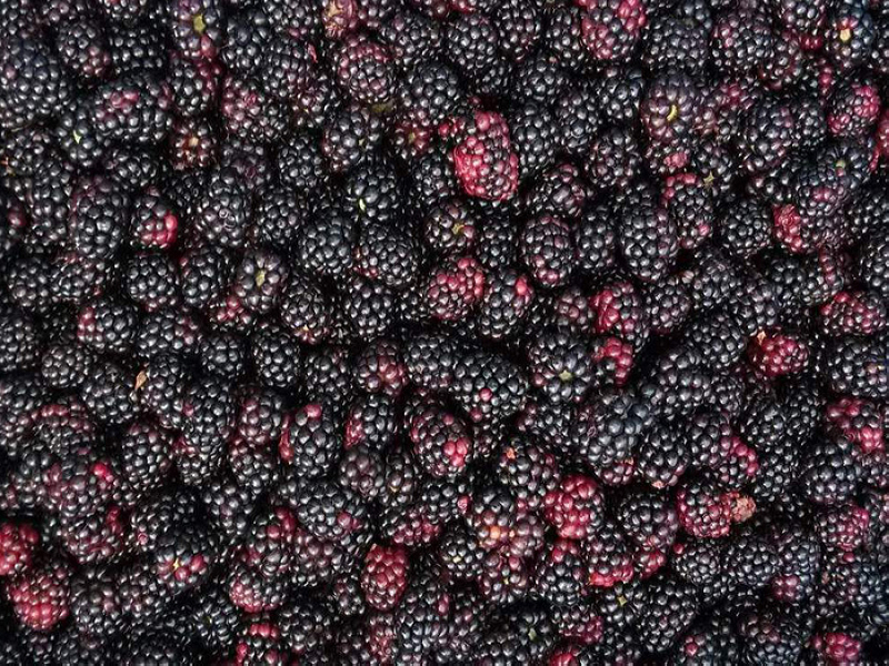 supply frozen blackberry