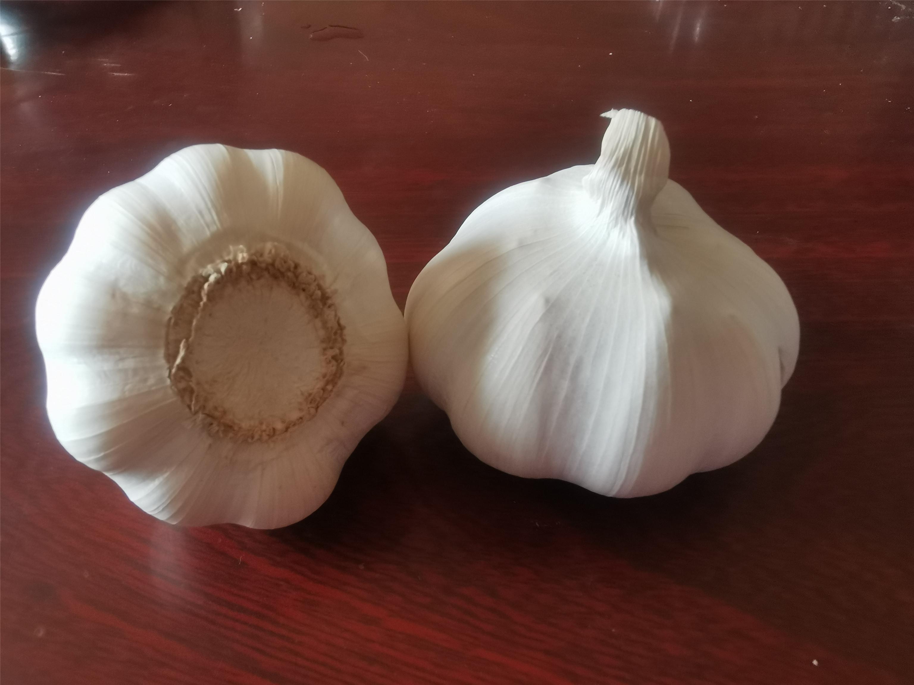 2020 Fresh Garlic